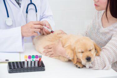 Laboratório Vetex diminui tempo de diagnóstico de exames de 3 para 1 dia