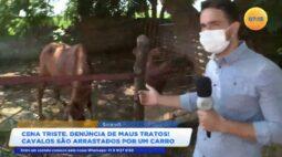 Maus-tratos em Sarandi: cavalos sendo puxados por um automóvel