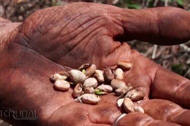 Feijão é o cultivo mais prejudicado pelo excesso de chuva