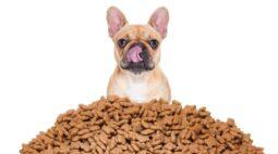 Como escolher o alimento ideal para cães e gatos?