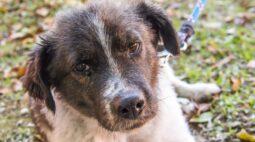 Sábado tem live de adoção de cães e gatos ao vivo pelo Facebook