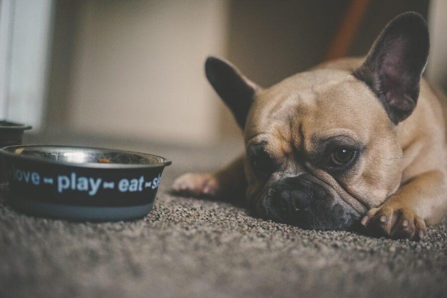 Pets poderão ser alimentados com carne produzida em laboratório