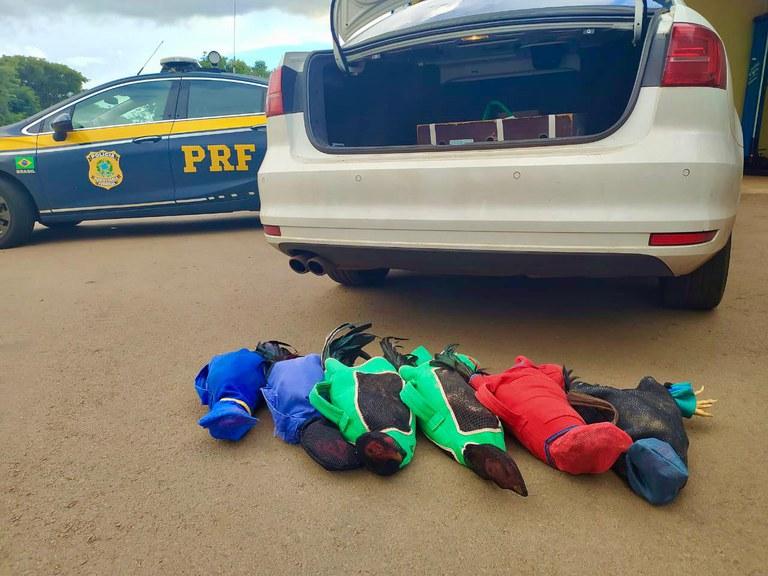 Prefeito paranaense é preso transportando galos de rinha em carro oficial do município