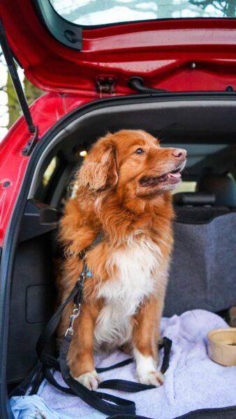 Metade dos donos de pets só viajam com seus pets