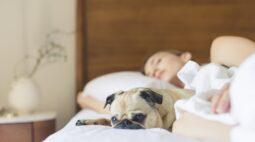 Compartilhar o quarto com o pet pode beneficiar a ambos