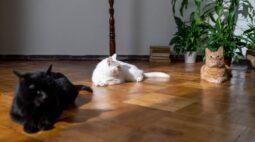 Plantas pet friendly: conheça as espécies amigas dos animais