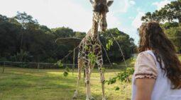 Depois de um ano fechado, Zoo de Curitiba reabre nesta quinta (18)