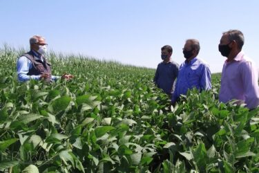 Plantio de soja na reforma de áreas de canaviais   RALLY DE PRODUTIVIDADE