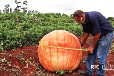 Confira os destaques do RIC Rural de domingo (7 de março)