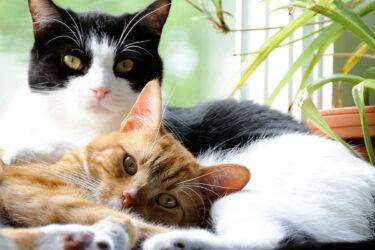 Seu gato solta muito pelo? Saiba o que pode ser.