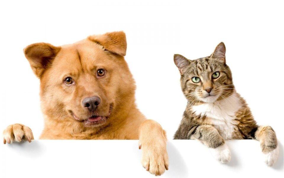 Veterinários alertam para a necessidade de escovação diária dos dentes dos pets