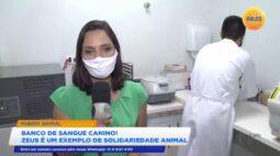 Banco de sangue canino: Zeus é um exemplo de solidariedade animal