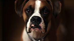 Fisioterapia para cachorro: alívio de dores e reabilitação