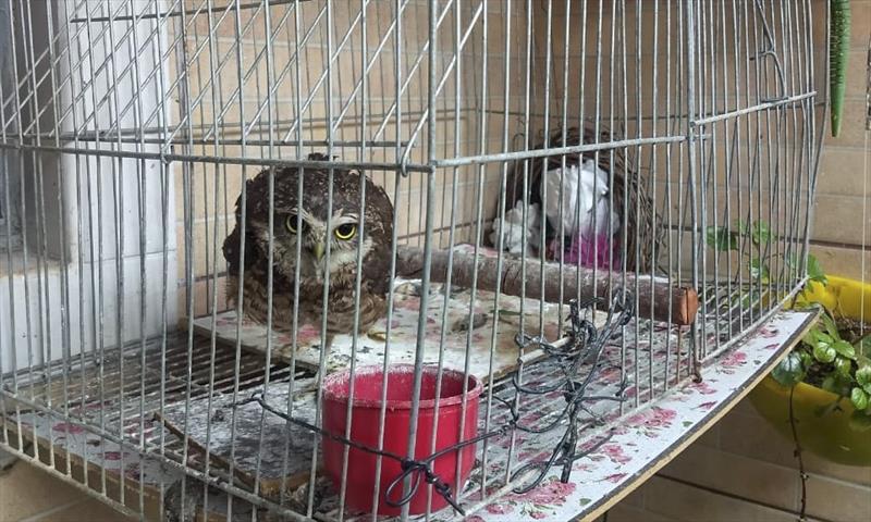 Coruja e cachorra, vítimas de maus-tratos, são resgatadas na mesma casa