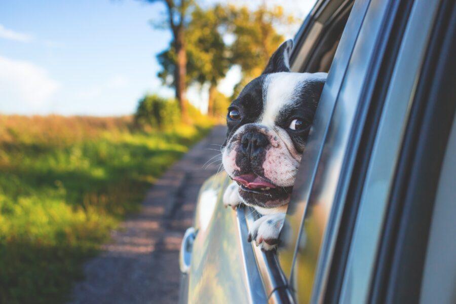 Como viajar de carro com cachorro
