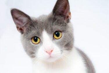 O que fazer quando gato não bebe água?