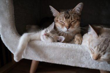 Tipos de areia para gatos: qual escolher para seu bichano?