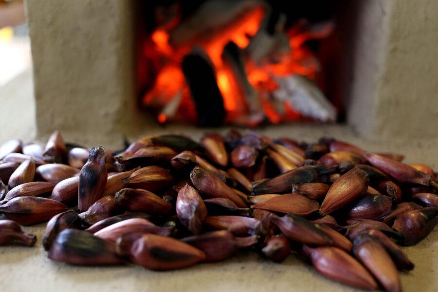 Venda de pinhão será liberada nesta quinta-feira (01) no Paraná