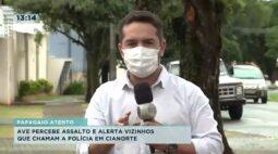 Ave percebe assalto e alerta vizinhos para chamar a polícia em Cianorte