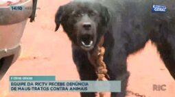 Equipe da Ric TV recebe denúncia de maus-tratos contra animais