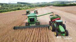 Confira os destaques do RIC Rural de domingo (18 de abril)