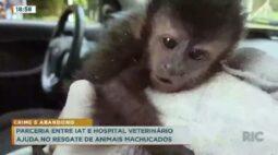 Parceria entre IAT e hospital veterinário ajuda no resgate de animais machucados
