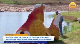 Cidade que já teve até jacaré furtado de zoológico se preocupa com sumiço de cisnes