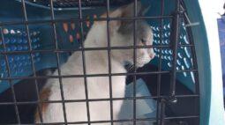 """""""Gato traficante"""" é apreendido pela polícia ao tentar entrar com drogas em presídio"""