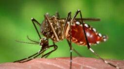 Secretaria da Saúde reforça atenção para casos de chikungunya