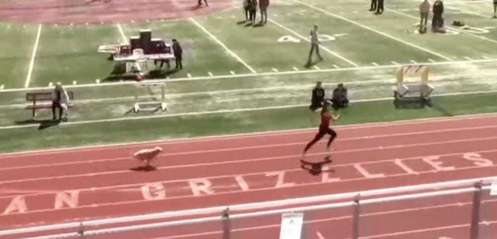 Cão invade pista de corrida e vence a competição; veja o vídeo