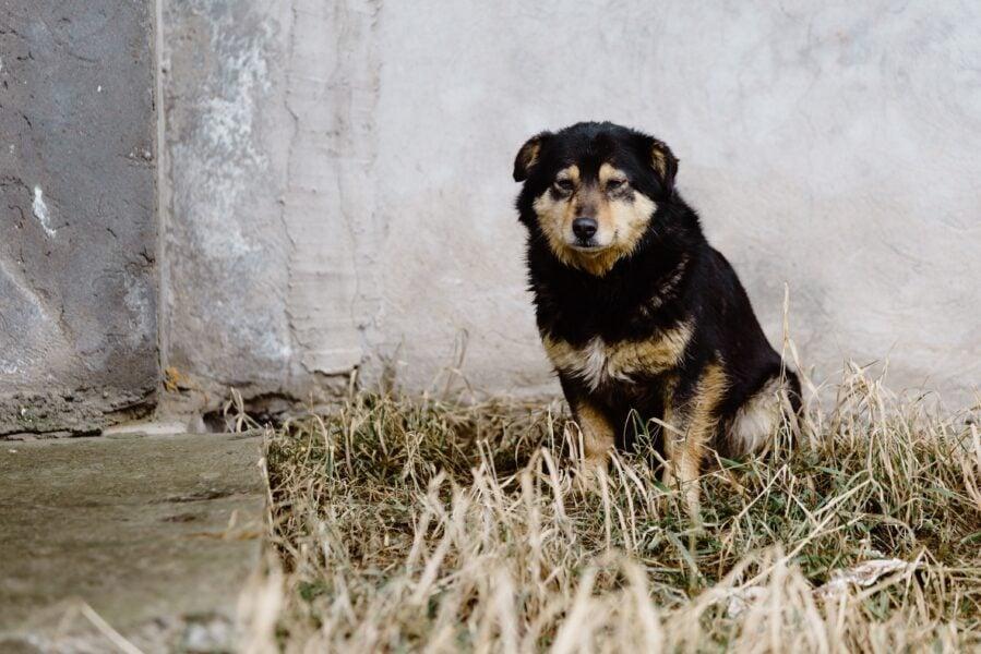 Cachorro perdido: 5 dicas sobre o que fazer nessa situação