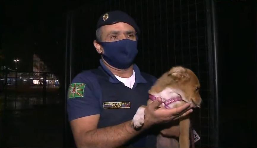 GM atende pedido inusitado e cuida de cachorrinha de vítima de assalto