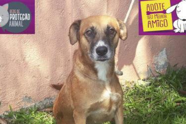 Evento online promove adoção de cães; conheça seu novo amigo