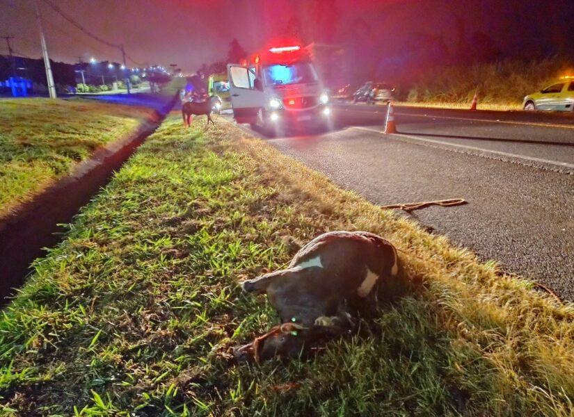 Cavalos causam acidente na BR-277 em Santa Tereza do Oeste
