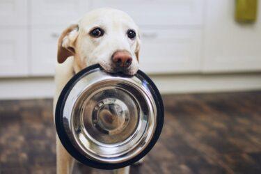 Comedouro lento: a solução para os cães comilões