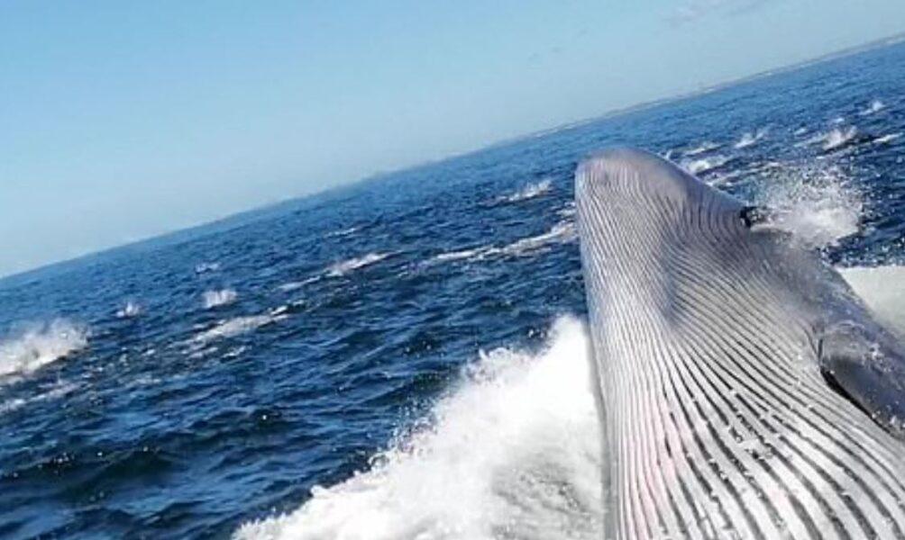 Homem quase é engolido vivo por baleia durante passeio com a família