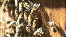 Idoso morre atacado por abelhas enquanto cortava grama