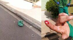 Gambá colocado vivo dentro de sacola morde o dedo de coletor de lixo