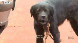 Equipe da RICTV recebe denúncia de maus-tratos contra animais