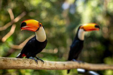 Parque das Aves terá novo horário de funcionamento a partir de 27 de abril