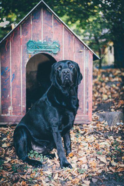 Tipos de casinha para cachorro: qual escolher?