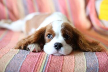 Vírus altamente contagioso tem se espalhado entre cães filhotes