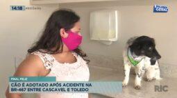 Final feliz: cão é adotado após acidente na BR-467 entre Cascavel e Toledo