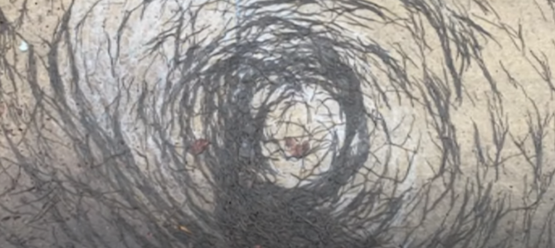 """""""Tornado de vermes"""" atinge população e cientistas tentam descobrir causas do fenômeno; veja vídeo"""