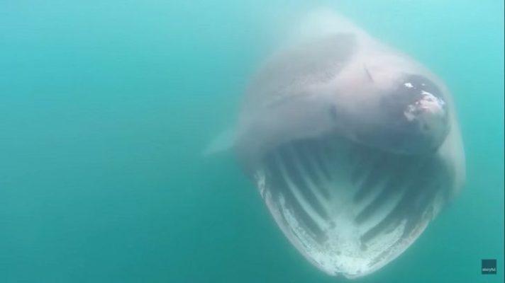 Homem dá de cara com seis tubarões em passeio de caiaque; veja o vídeo