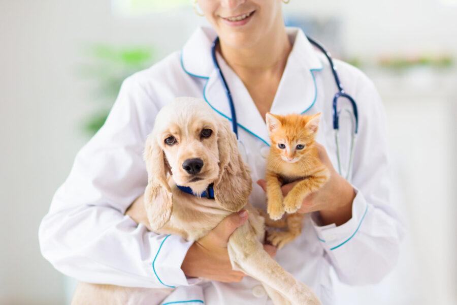 Vetnil lança campanha Abril Pet Essencial