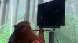 VÍDEO: Macaco joga videogame com a mente através de dispositivo no crânio