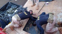Pai e filho são presos com quase meia tonelada de maconha no Paraná