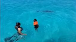 VÍDEO: Cachorro se encanta por golfinho e eles se tornam 'amigos'