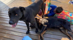 Família de Araucária busca por cachorro desaparecido; criança está sofrendo